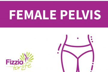 Fizzio-Your-body-female-pelvis