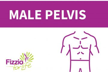 Fizzio-Your-body-male-pelvis